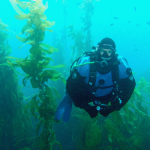Diver in kelp forest; Photo by Stacey Janik.